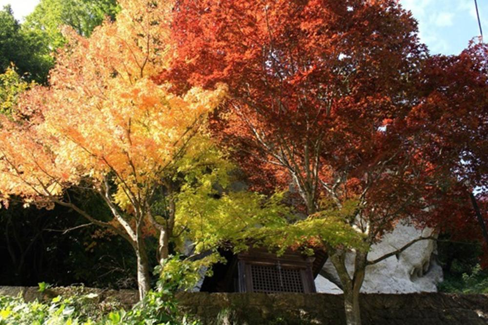 秋の七草とは?種類や花言葉、春の七草との違いを知ろう